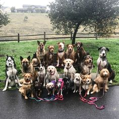 I started pet sitting and dog walking with busy households and individuals in mind. To create a care plan and schedule that provides the best care for your Dog. My goal is to allow our Pup Parents to have Peace of Mind, knowing that while they are away from home, at work, or on vacation, their lo...