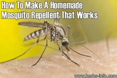 How+To+Make+A+Homemade+Mosquito+Repellent+That+Works