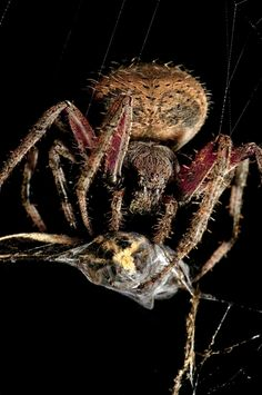 30 Fascinating Insect Macro Photos