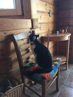 先程、事務所から降りてきたら玄関に招き猫! いつも、ここにいないけど今日な私がリメイクした椅子に座って待ってました(^○^) かわいい招き猫が皆様のお越しお待ちしております! ☆猫は自宅にしかおりません。モデルハウスにはおりませんので猫アレルギーの方はご安心ください! 詳しくは http://naturefield.jp/73520/?p=987&fwType=pin