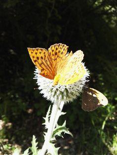 @Butterfly