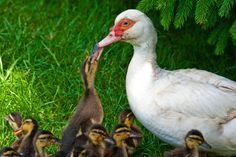 Duck's school ;)