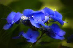 Blue by Wim Bolsens, via 500px