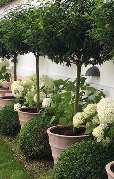 Terracota Planters