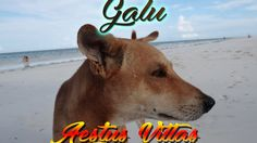 Travel Videos, Kenya, Villas, Dogs, Youtube, Animals, Animales, Animaux, Doggies