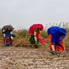 """Gender and Climate Change: Putting Food on the Table """"Women farmers account for 45-80% of food production in the developing world depending on region their food and job security are threatened by climate change."""" 