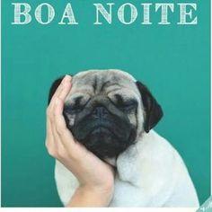 BOA NOITE! <3 <3 <3 #petmeupet #cachorro #gato #amocachorro #amogato #boanoite #amoanimais