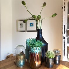 Tafel decoreren stylen vaas pot fles cactus