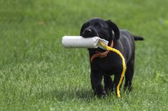 Puppy Training When Working Full-Time