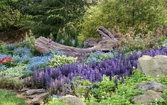 Shade garden with Ajuga, Sweet Woodruff, and Forget-me-Nots.