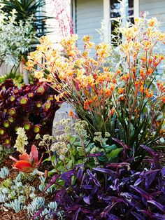 There are no rules in this garden, natives mix with succulents, grasses, and Mediterranean plants, and colour is king! Photo – Annette O'Brien for The Design Files. Australian garden Sam Clayton and Mal Wood - The Design Files Australian Native Garden, Australian Plants, Australian Garden Design, Australian Native Flowers, Melbourne Garden, Ideas Para El Patio Frontal, Mediterranean Plants, Drought Tolerant Garden, Dry Garden