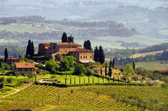 Tuscany Vineyard, I live in NOVA and have never been to a vineyard