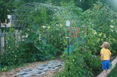 Garden Trellis Arch-Morning Glories would be faster growing