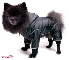 Wet & Wind overalls are specially made for windy and wet weather. They are lined with mesh that protests the dog's coat. They are waterproof and very lightweight.  Wind –Rain overalls for dogs, come in seven sizes XS – 3XL and in many colors.