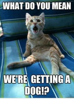 My cat totally!
