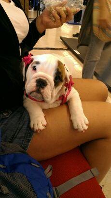 Sweet Baby Moo