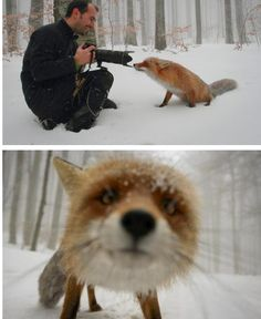 Aww... he just wanted his picture taken