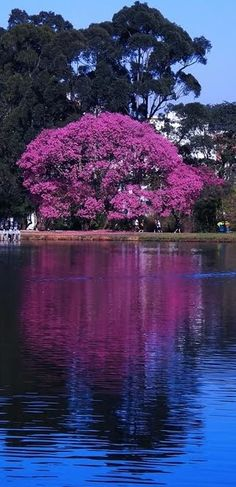lake in Ibirapuera Park, São Paulo Beautiful Places To Visit, Wonderful Places, Beautiful World, Brasil Travel, Places Around The World, Around The Worlds, Flowering Trees, Wonders Of The World, Mother Nature