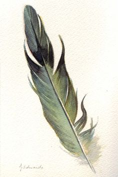 Mourning Dove feather - overcoming hesitation or blocks- we have doves in our backyard!