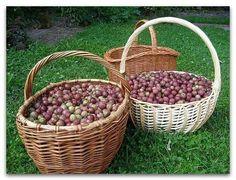 Nápady pre záhradu | chalupa | krajiny | záhrada | VK