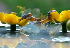 Beautiful Life of Snails by Vyacheslav Mischenko