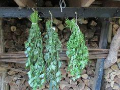 Wil je de heerlijke kruiden uit je groentetuin langer gebruiken? Laat ze dan drogen. Dat is heel gemakkelijk om te doen, in dit artikel leggen we het uit. Asparagus, Vegetables, Plants, Om, Studs, Planets, Asparagus Bacon