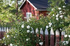 A sweet little cottage, picket fence, and lots of fragrant flowers. Swedish Cottage, Red Cottage, Swedish House, Garden Living, Home And Garden, Red Houses, Living Etc, Room Of One's Own, Pause
