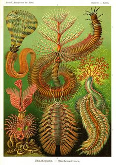 What an amazing artist Ernst Haeckel was! Art Forms of Nature – The Ernst Haeckel Collection ~ Kuriositas Vintage Illustration, Botanical Illustration, Ernst Haeckel Art, Art Et Nature, Natural Form Art, Photocollage, Memento Mori, Botanical Art, Sea Creatures