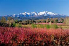 Mont Canigou.