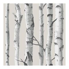 Nuwallpaper Birch Tree Peel And Stick Wallpaper In Grey