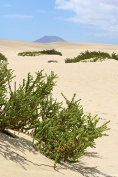 Deserts of Fueteventura, Canary Islands (a stone's throw from the very touristy beach resorts!)