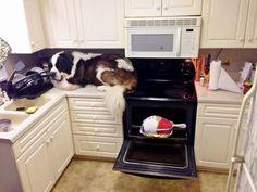 Perros que no saben lo grandes que son | Cuidar de tu perro es facilisimo.com