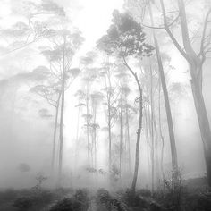 Black and White Forest in the Fog / Photo by Hengki Koentjoro Landscape Photography, Nature Photography, Photography Magazine, Winter Photography, Film Photography, Fashion Photography, Wedding Photography, Cool Photos, Beautiful Pictures