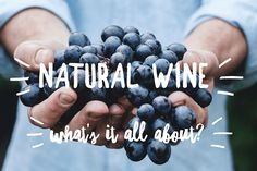 Natural Wine - The New Trend That has Oenophiles Raving or Ranting Wine Merchant, Grape Juice, Natural Red, Wine Making, New Trends, Trials, I Foods, White Wine, Wines