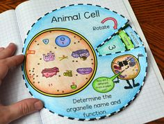 animal and plant cell, animal and plant cell foldable, animal and plant cell interactive notebook 6th Grade Science, Science Curriculum, Middle School Science, Science Education, Science Activities, Higher Education, Science Cells, Science Biology, Life Science