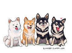 dog training,teach your dog,dog learning,dog tips,dog hacks Cute Animal Drawings, Animal Sketches, Cute Drawings, Drawing Anime Hands, Japanese Dogs, Guache, Kawaii Art, Shiba Inu, Dog Art
