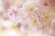 Sweet Spring | by Jacky Parker Floral Art