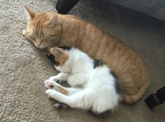 But you don't care what anyone else thinks. | 17 Kitty BFFs Who Will Restore Your Faith In Friendship