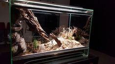 Neues Terrarium für H. pulchripes - Terrarienpics - Vogelspinnenstammtisch Schweiz