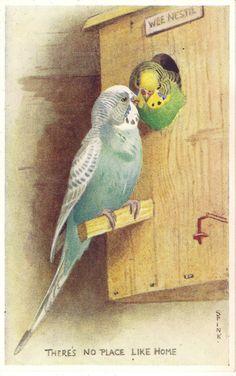 0ab5143372 Lot of 6 Parakeet Vintage Valentine s