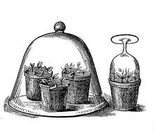 Vintage Garden Clip Art - Glass Cloche with Pots - The Graphics Fairy Papel Vintage, Clipart Vintage, Decoupage, Rose Marie, Garden Journal, Graphics Fairy, Scrapbook, Digi Stamps, Vintage Images