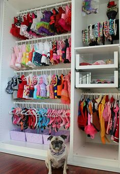 Chole closet must haves Dog Grooming Shop, Dog Grooming Business, Animal Room, Dog Closet, Dog Bedroom, Puppy Room, Yorkie Dogs, Puppies, Dog Corner