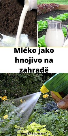 Glass Of Milk, Garden Tools, Drinks, Plants, Drinking, Beverages, Yard Tools, Drink, Plant