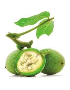 We'll show you how to turn those green walnuts into black gold by Christmas. Squirrel, Lime, Clip Art, Portland, Vodka, Fruit, Drinks, San Giovanni, Black Gold