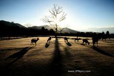 A nice landscape photo of Japan at Nara #Japan_photo   THE JAPAN PICS More Japanese pics ... http://jpnpics.com