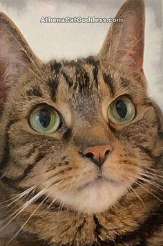 Caturday Art Cruelty Free Shop, Eye Close Up, Photo Editor Free, Big Eyes, Animal Paintings, Art Blog, Cat Art, Animal Pictures, Pet Adoption