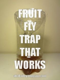 aka Bailey: A Homemade Fruit Fly Trap that Actually Works Homemade Fruit Fly Trap, Diy Fruit Fly Trap, Fruit Fly Traps, Fruit Fly Killer, Fruit Flies, Cleaners Homemade, Diy Home Crafts, Pest Control, Mother Earth