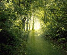 Quiet, sunlit pathways have always beckoned me to follow.