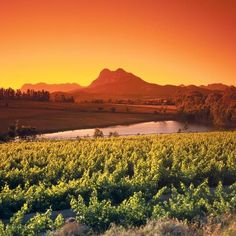 Beautiful pic of Paarl. About 50 km from Cape Town, Paarl is situated beneath a large granite outcrop formed by three rounded domes, the prominent one named Paarl (which means pearl) rock. Zimbabwe, Port Elizabeth South Africa, South Africa Tours, Wine Safari, Africa Travel, Cape Town, Places To See, Photos, Wineries