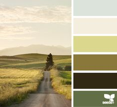 Country road  | colour palette